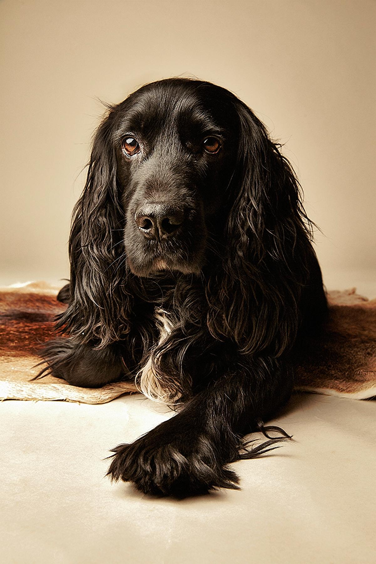 Dog © Henry W S Muller_130