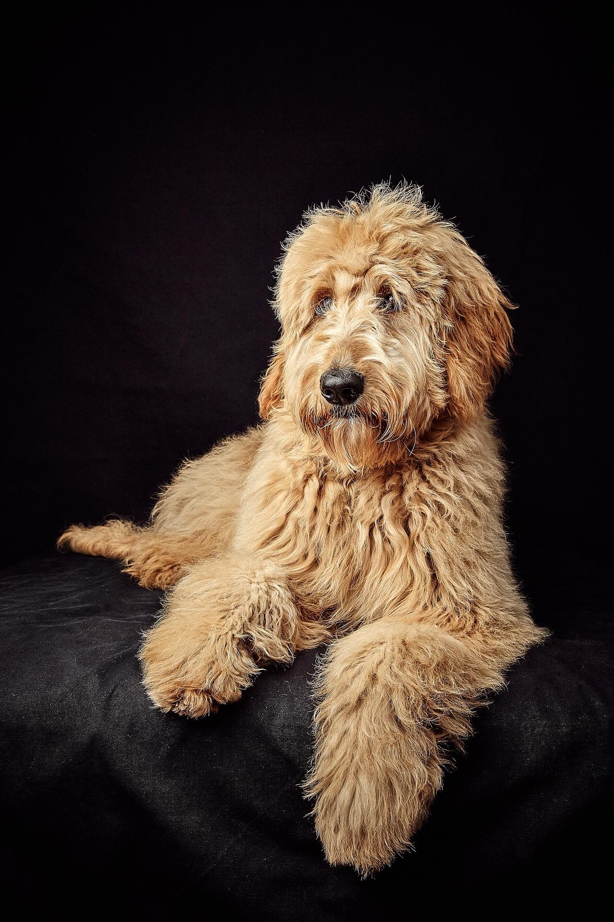 Dog © Henry W S Muller_80