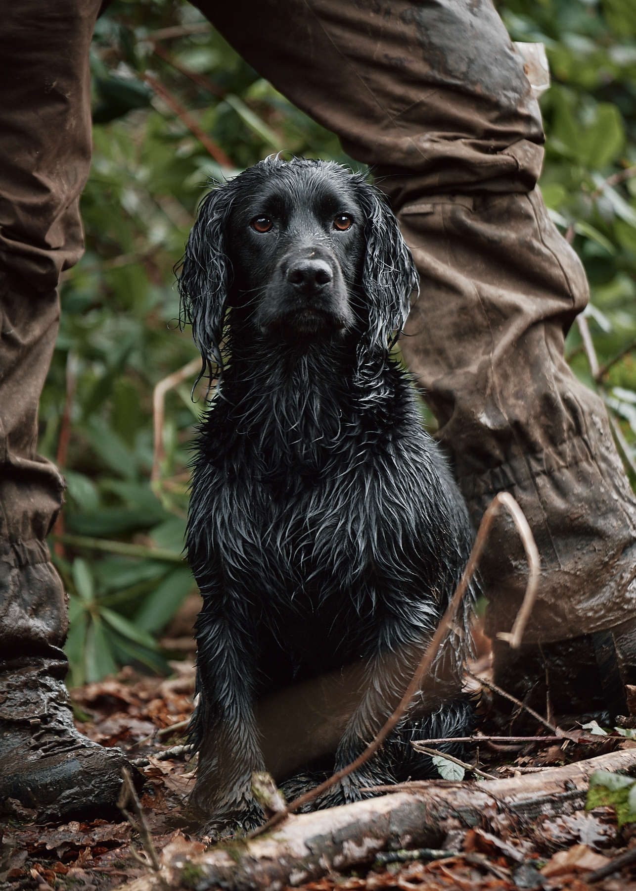 Working Hunting Dogs_© Henry W S Muller_14